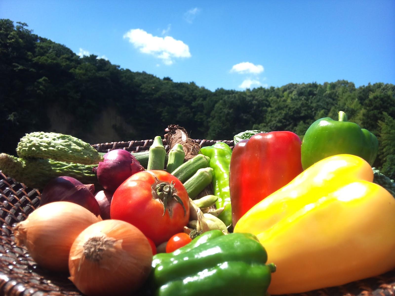 夏野菜の種類大公開!日差しをたっぷり浴びた夏野菜をご紹介します!のサムネイル画像