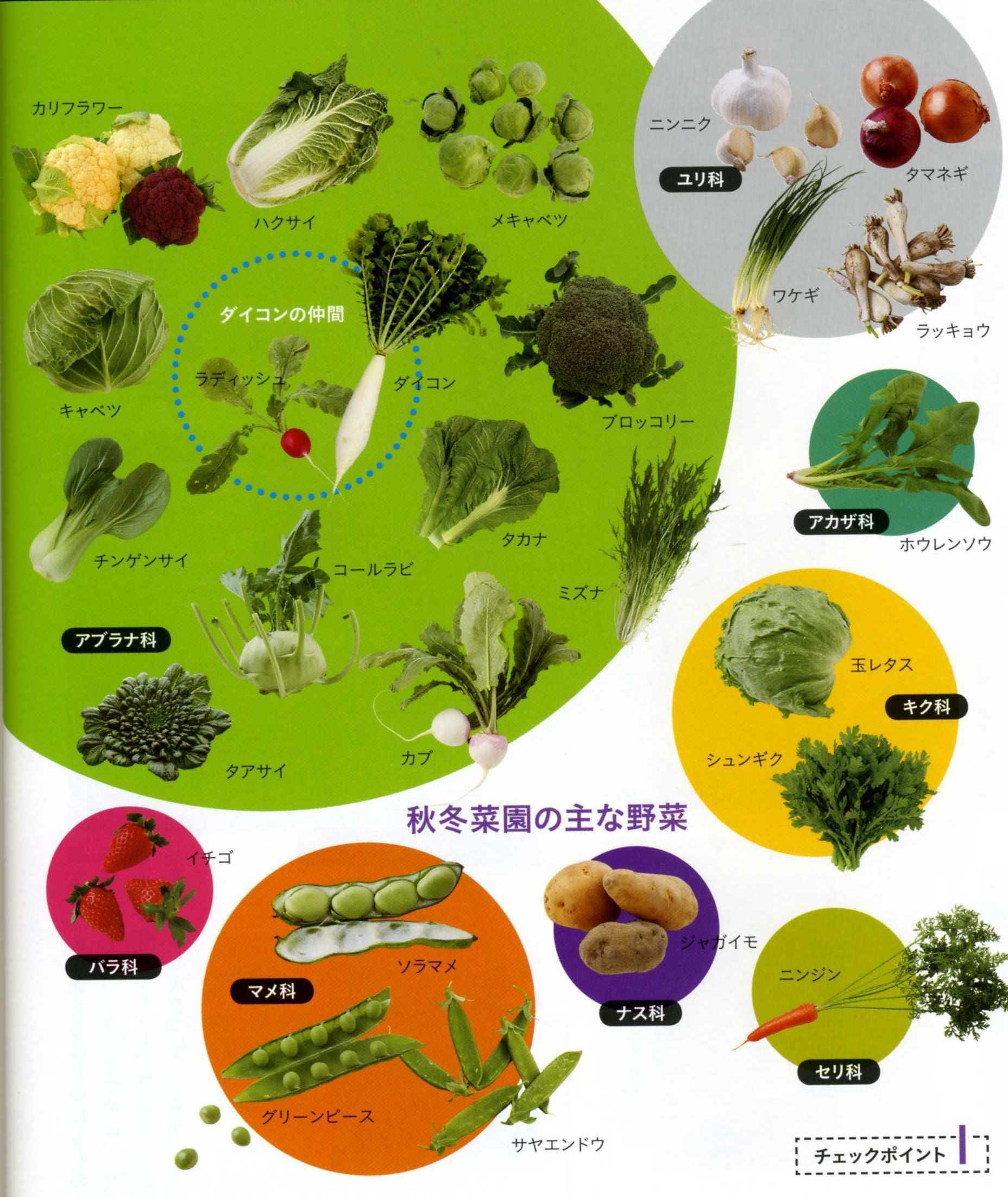 ガン予防にも美容にも効果的なアブラナ科野菜をまとめてみました。のサムネイル画像