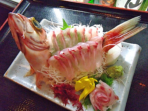 釣って楽しい♪食べて美味しい♪身近な大衆魚♪メバルの刺身の作り方のサムネイル画像