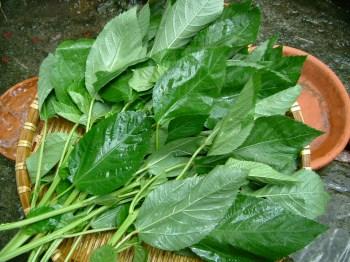 クレオパトラも愛した野菜・モロヘイヤの正しいゆで方と知識を知ろうのサムネイル画像