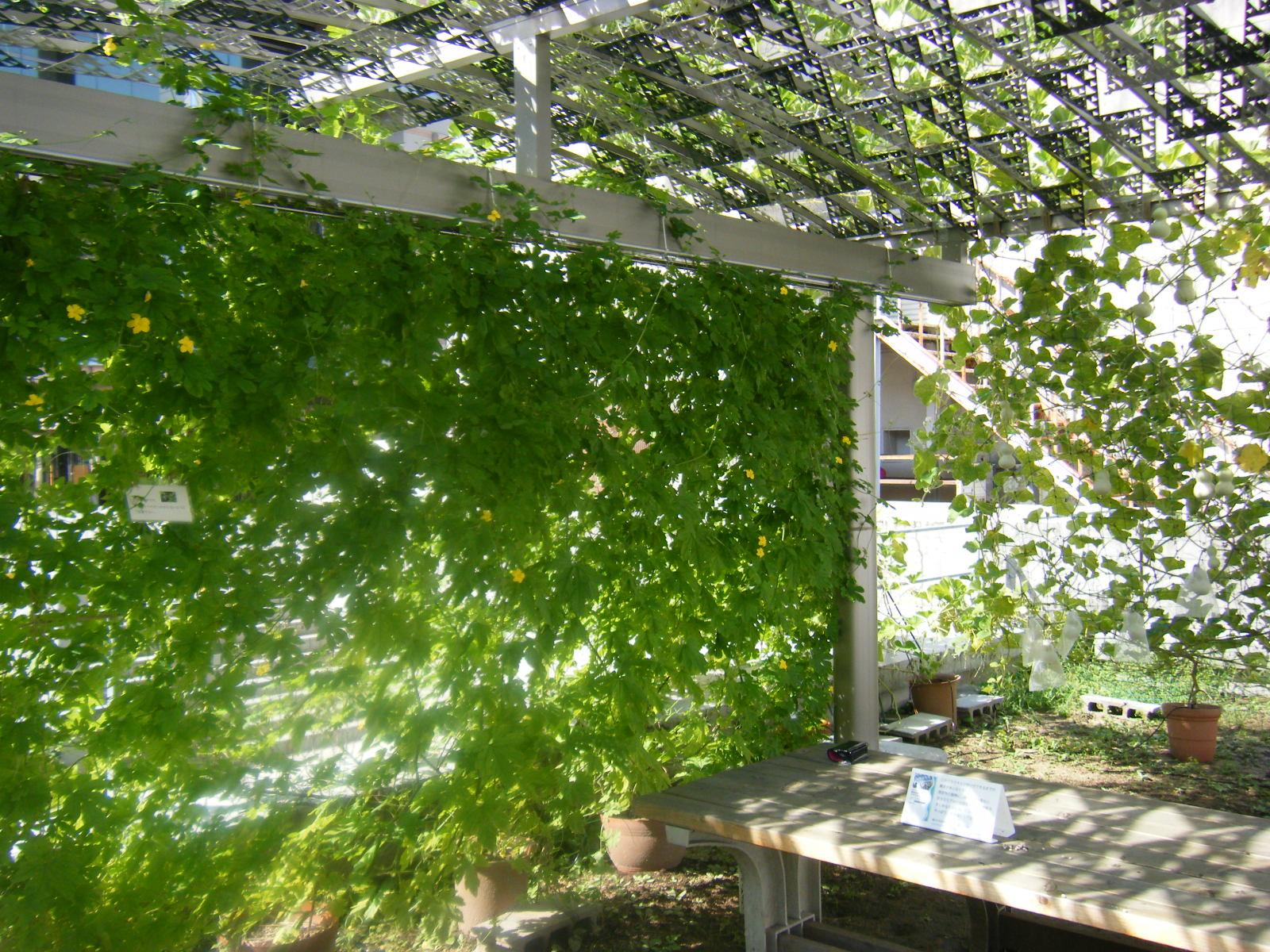ゴーヤの「摘心」をして立派なグリーンカーテンを作ってみよう!のサムネイル画像