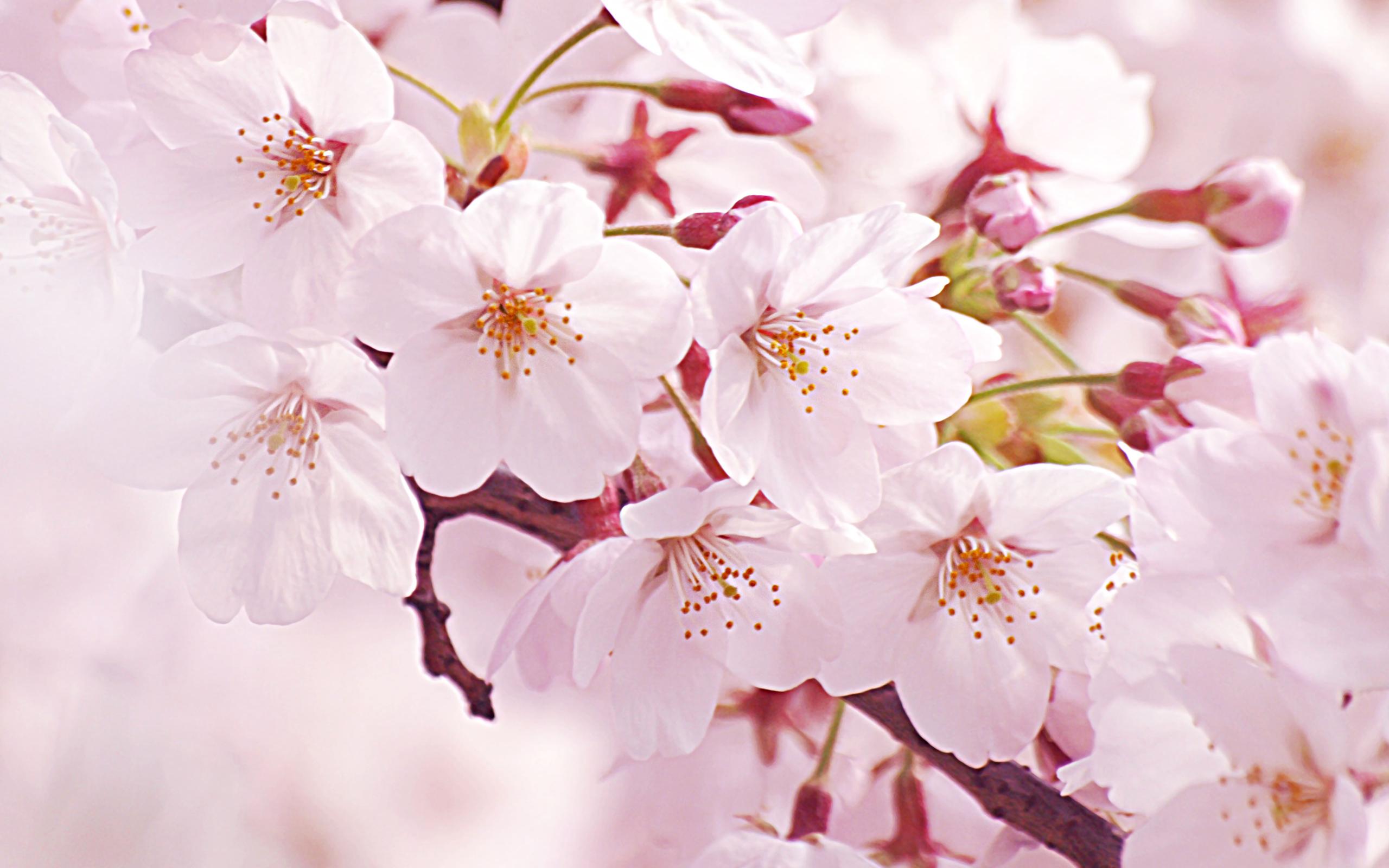 花より団子?!お花見の季節に欠かせないおすすめのおつまみ一覧のサムネイル画像