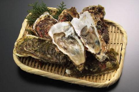 石川県で食べられる美味しい海の幸、能登牡蠣の詳細をまとめました。のサムネイル画像