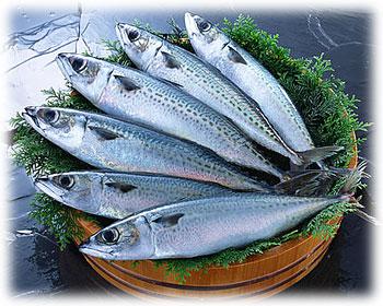 魚をさばくのは面倒!簡単で上手な鯖のさばき方教えちゃいます☆のサムネイル画像