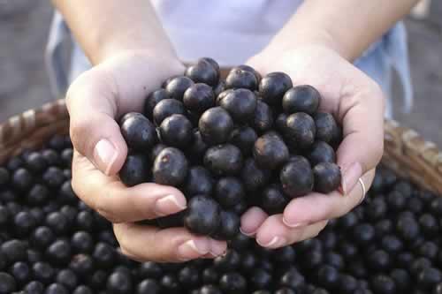 アサイーはブラジルの奇跡と呼ばれるフルーツ!含まれる効能とは?!のサムネイル画像