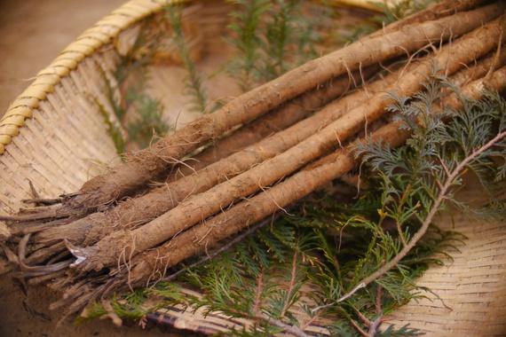 ごぼうの保存方法と賞味期限は?上手に保存してストック食材にしようのサムネイル画像