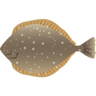 高級魚の代表☆知ってるだけで自慢が出来る!ヒラメのさばき方♪のサムネイル画像