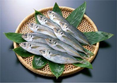 アジが食べたい!関東にお住まいならマズメ狙いで勝浦漁港へLet's goのサムネイル画像