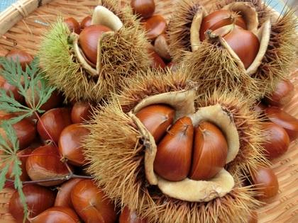 栗を美味しく食べるために知っておきたい! 栗の上手な保存方法のサムネイル画像