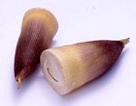 知ってる!?旬の筍を味わう!知っ得情報とおいしい保存の仕方!のサムネイル画像