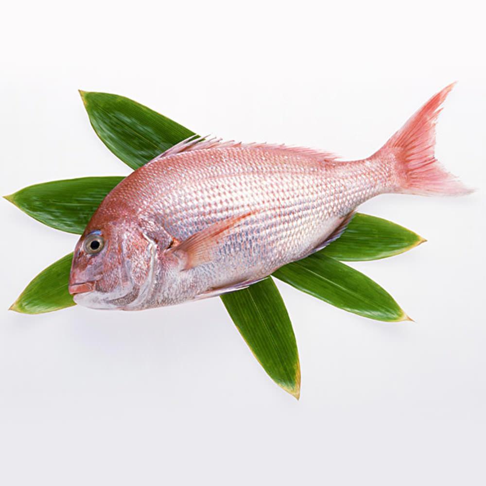 鯛 種類は一般的に24種類。めでたい!ありがたい!と喜びの表現にのサムネイル画像