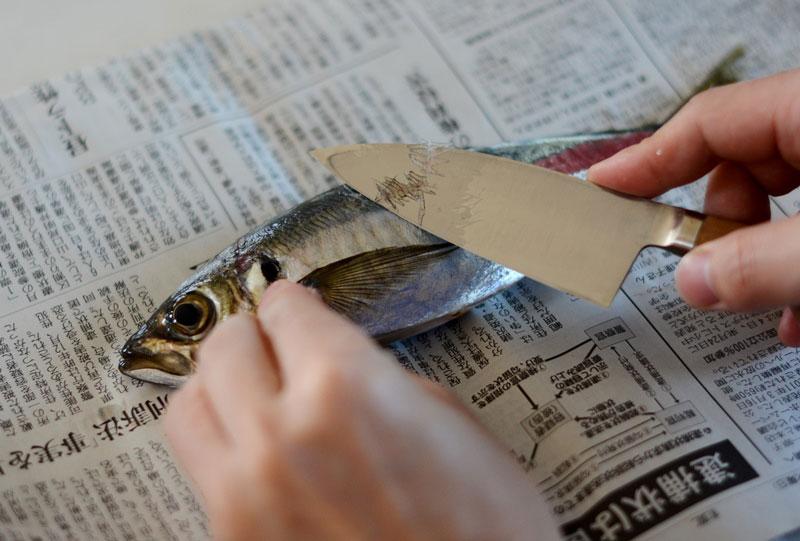 新鮮な鯵のさばき方のコツを知って自分で料理してみませんか?のサムネイル画像