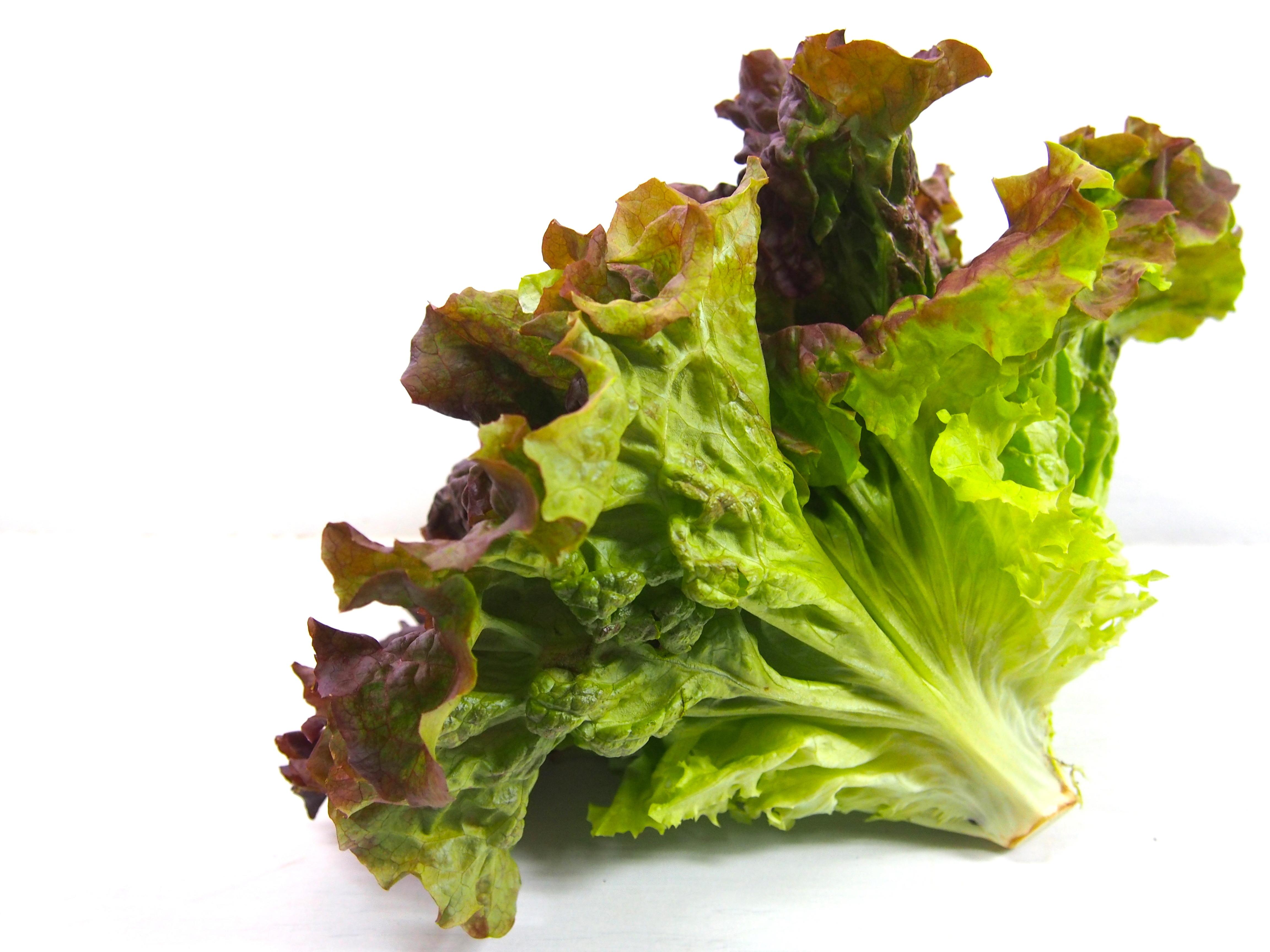 サラダにはサニーレタスがおすすめ!栄養豊富なサニーレタスの秘密のサムネイル画像