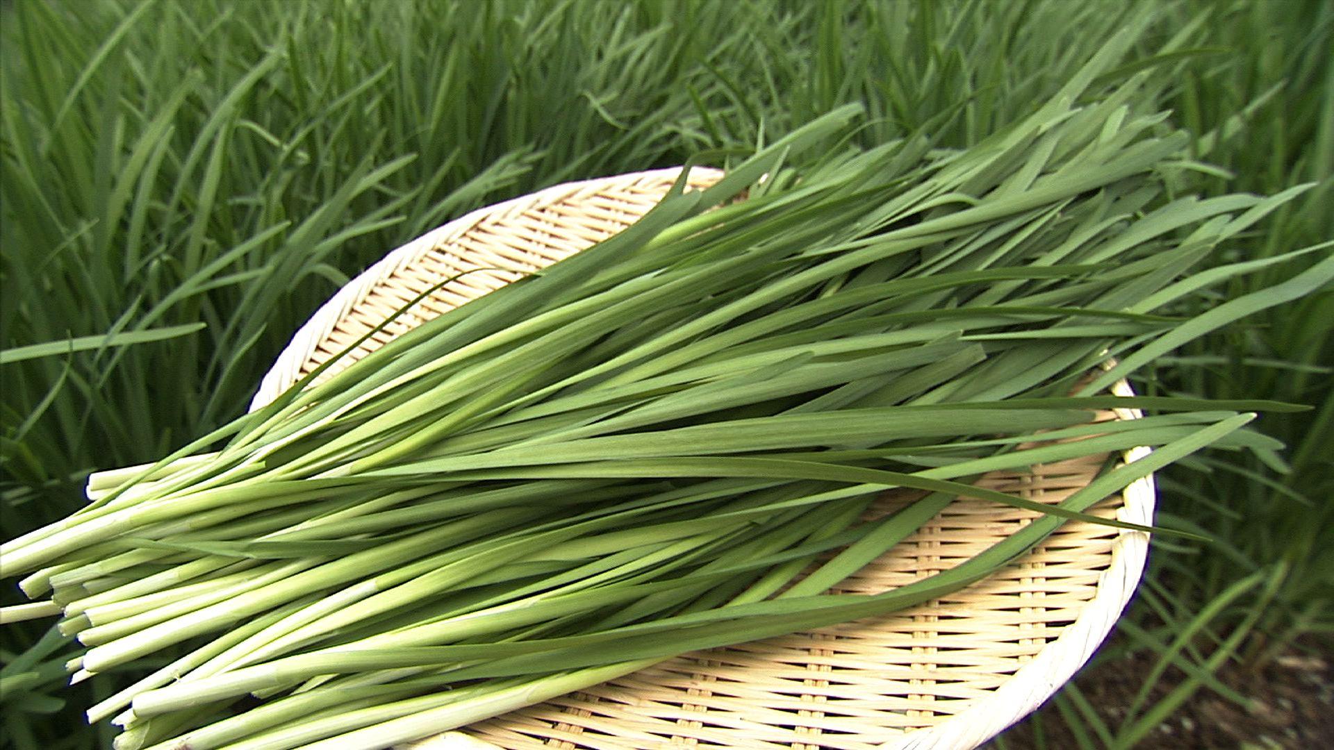 栄養豊富な野菜!ニラを冷凍保存して常備野菜にする方法とは?のサムネイル画像