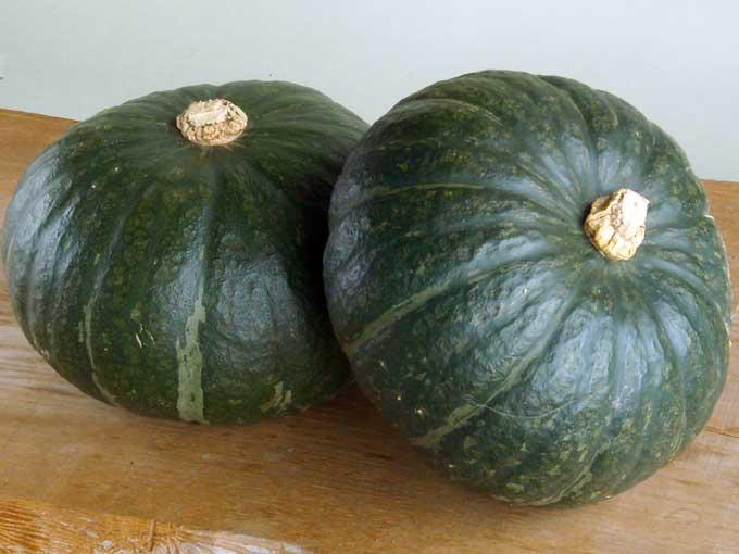 かぼちゃの煮物やコロッケに!おいしい!かぼちゃの育て方!のサムネイル画像