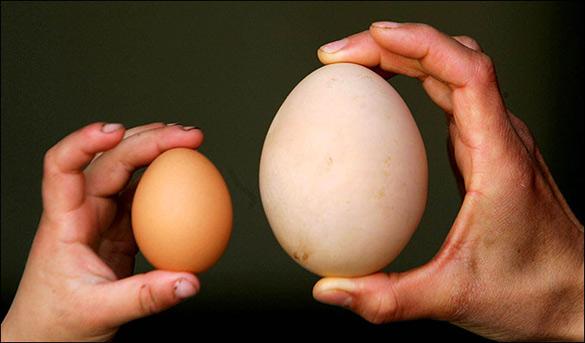 実は良く知らない卵のサイズと重さ(グラム)の事のご紹介ですのサムネイル画像