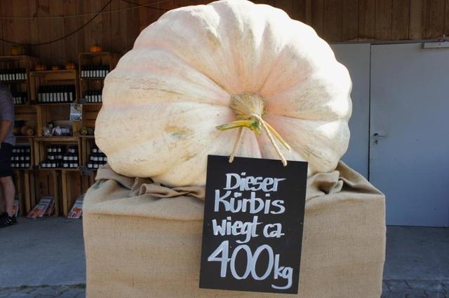 意外と知られていないかぼちゃの旬!いったいいつが美味しいの?のサムネイル画像