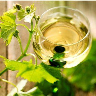 一面に広がるブドウ畑!美しい場所でできたアルザスワインを知る!のサムネイル画像