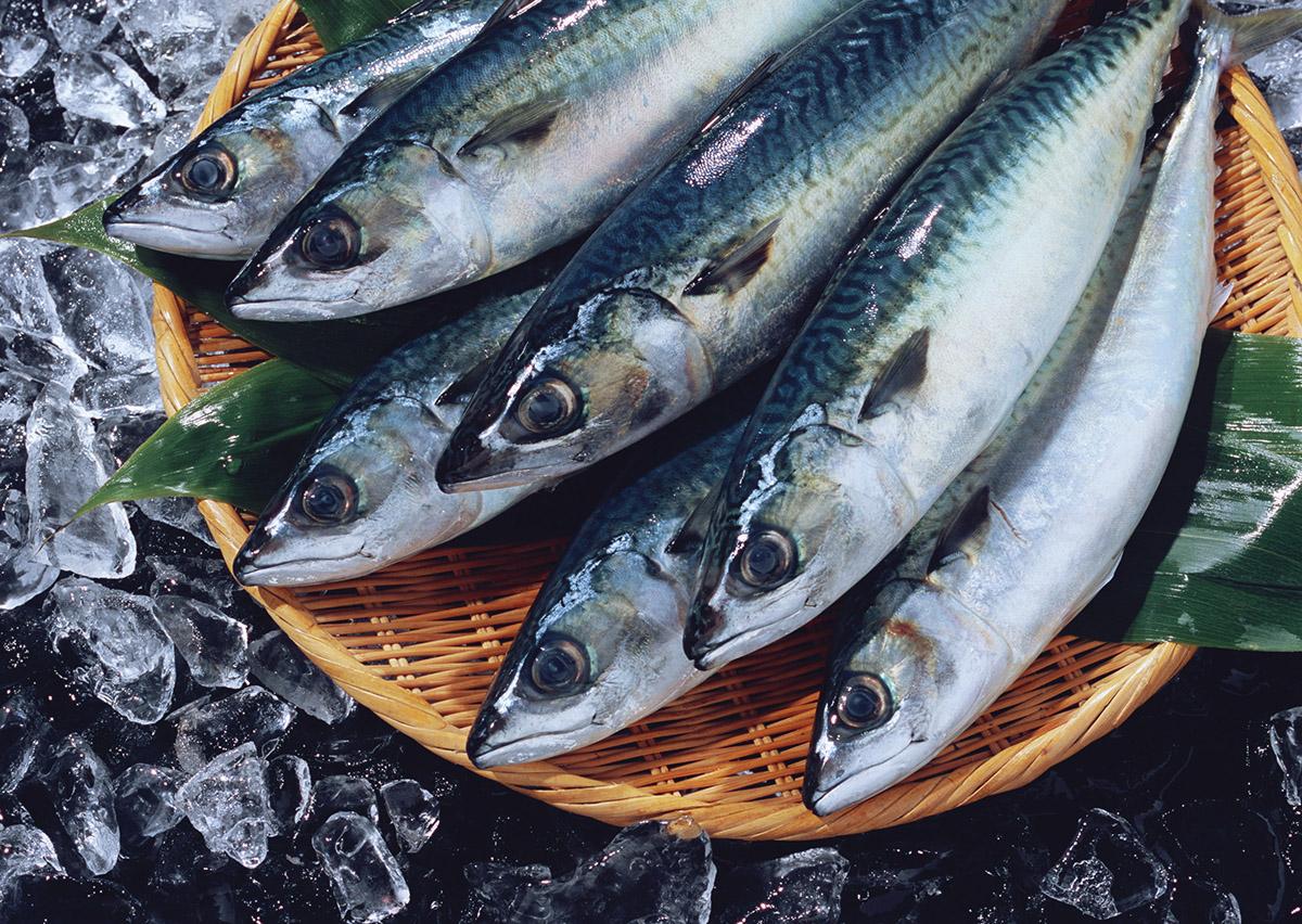 鯖が美味しい季節はいつ?鯖の旬と美味しい鯖の見分け方をご紹介!のサムネイル画像