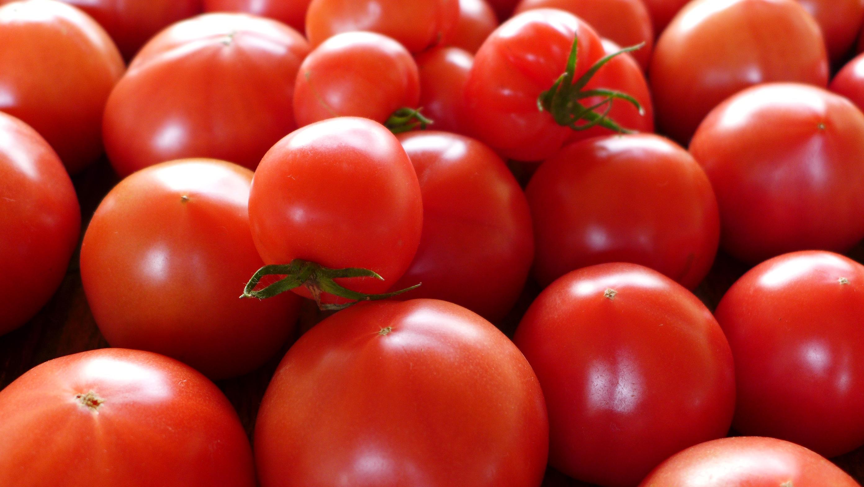 効能がすごい!トマトが赤くなると医者は青くなるって本当なのか?!のサムネイル画像