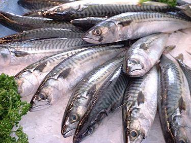 鯖があたるっていうのは本当かな?鯖の刺身は食べられるかな?のサムネイル画像