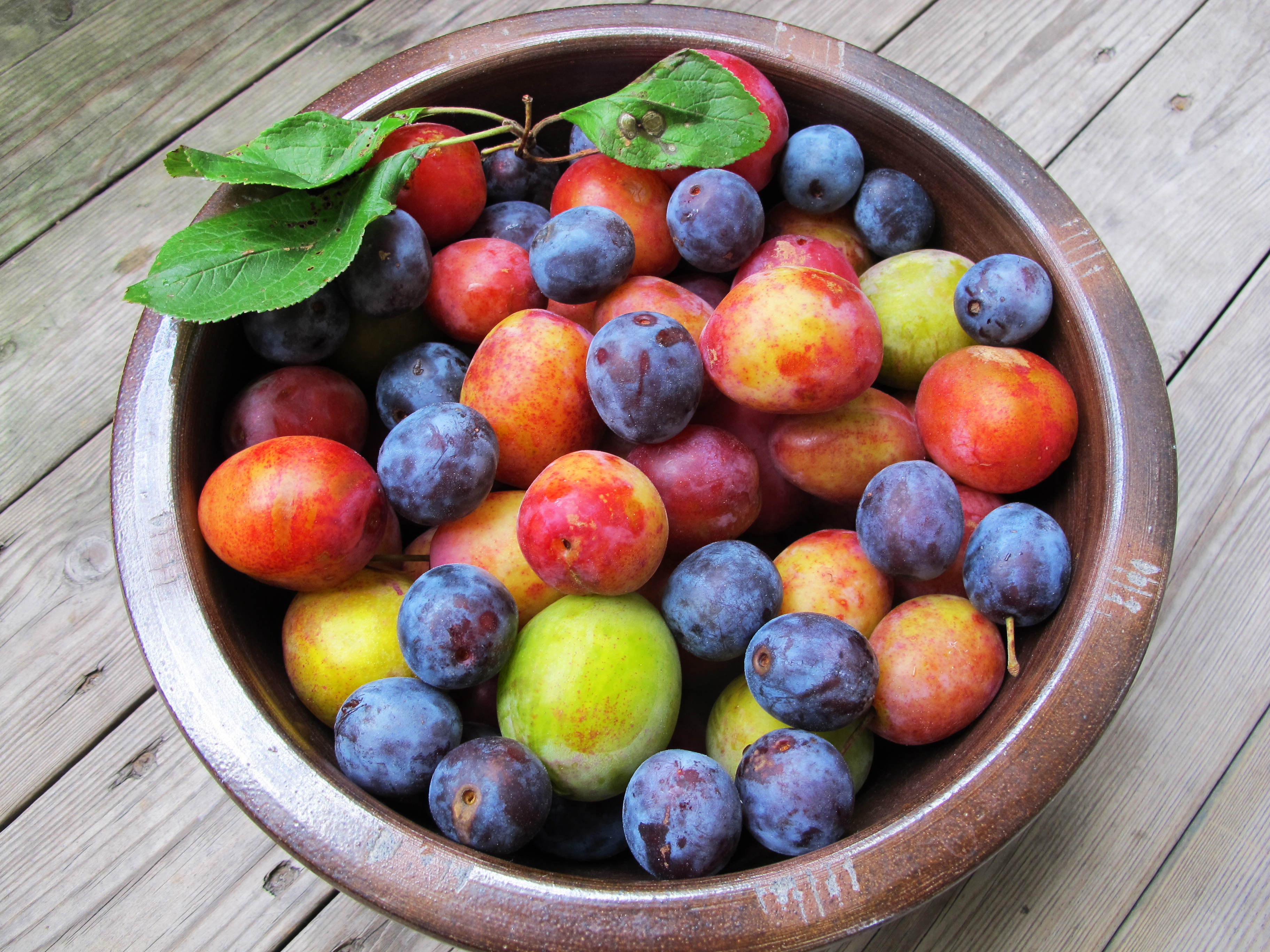 真夏のフルーツ!旬を美味しく味わう、プラムの食べ方とは?のサムネイル画像