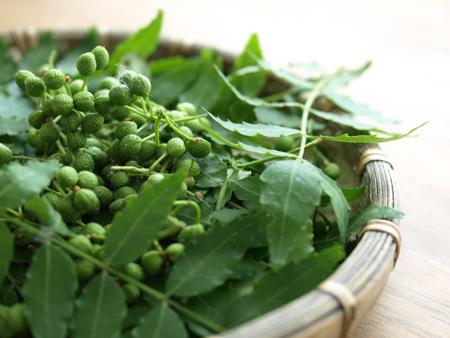 粉山椒とは全然香りが違う!実山椒の使い方と魅力発見しましたのサムネイル画像