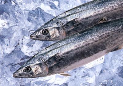 食べて美味しい!釣って楽しい!!旬のさわらを10倍楽しむ方法!!のサムネイル画像