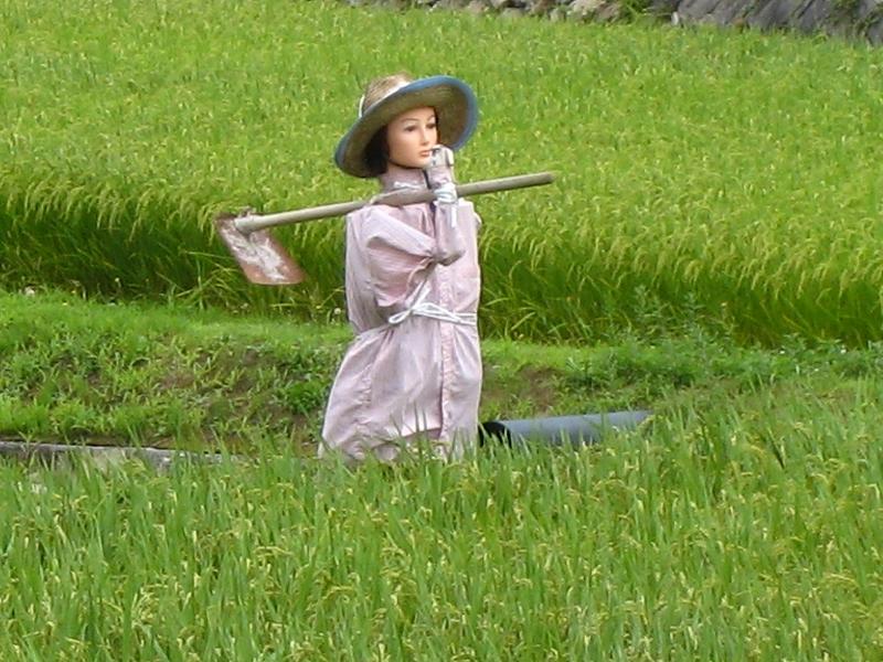 今食べているお米の種類はうるち米のジャポニカ米の精白米です。のサムネイル画像