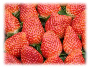 春が旬のいちご!需要が多い冬は第二の旬!いちごのおすすめレシピのサムネイル画像