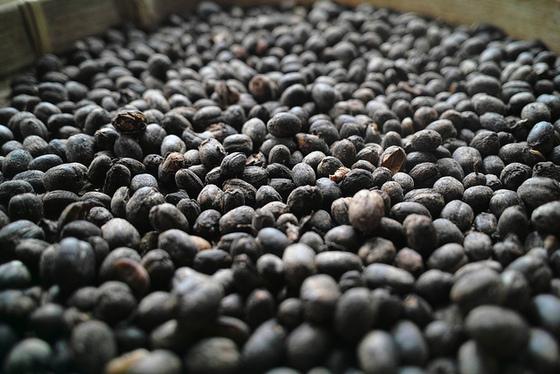 しつもーん!コーヒー豆の種類は何種類ある?コーヒー豆トリビアのサムネイル画像