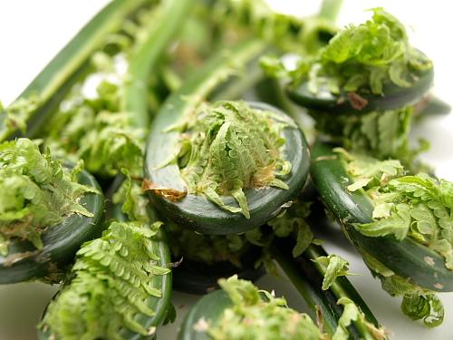 美味しい春の味覚、「こごみ」。おいしいこごみの食べ方もご紹介♪のサムネイル画像